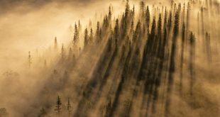 kansikuva usvainen metsä